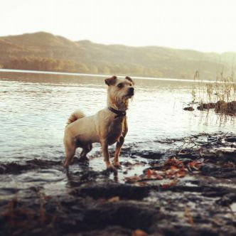 Baxter-dog-hazelwood-lough-gill-sligo